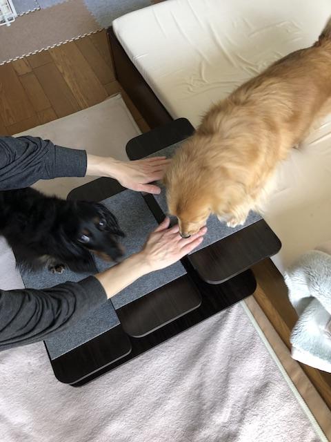 犬猫用昇り降り用ステップ